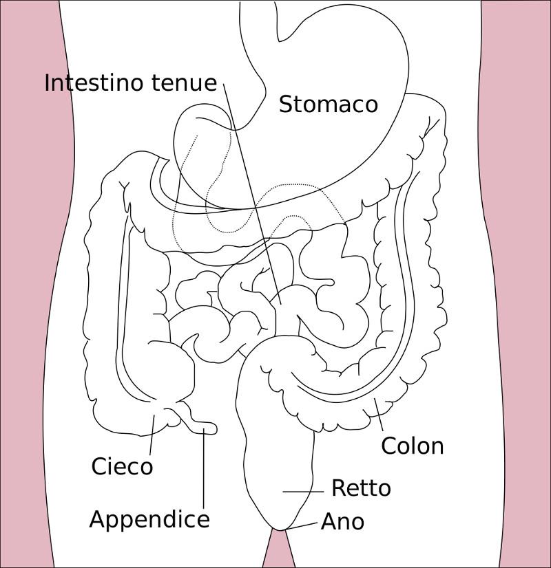 dieta senza glutine intestino